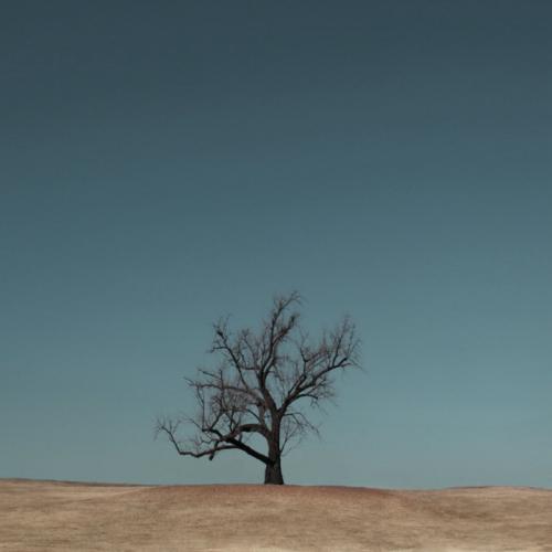 [Single] Hazeblue – Tree