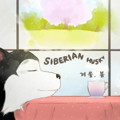Siberian Husky – 겨울, 봄