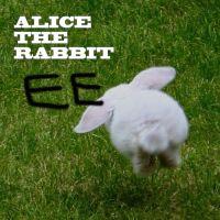 Alice The Rabbit 앨범 이미지