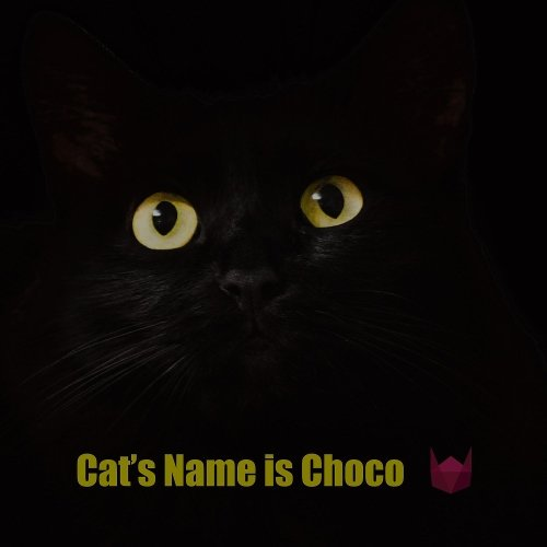 WindyCat – Cat's Name is Choco – Single
